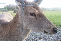The Scottish Deer Centre, Cupar, United Kingdom