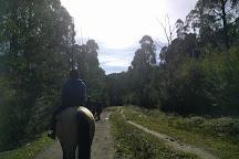 Ryders Horse Riding Tours, Labertouche, Australia