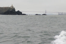 SF Bay Whale Watching, San Francisco, United States
