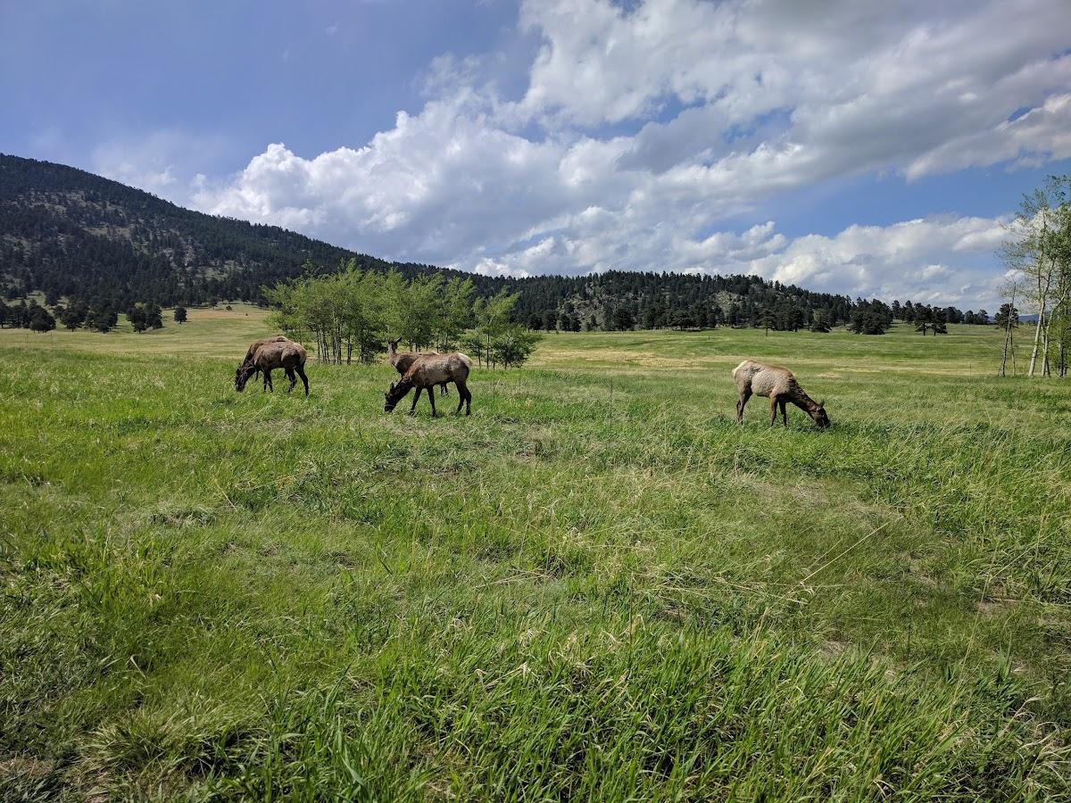 Elk Meadow Park 2855 Bergen Peak Dr Image