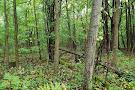 Huckleberry Swamp