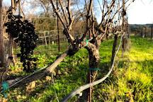Wine Country Journeys LLC, Healdsburg, United States