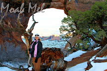 Pine Tree Arch, Arches National Park, United States