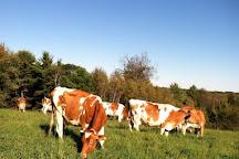 High View Farm, Harrison, United States