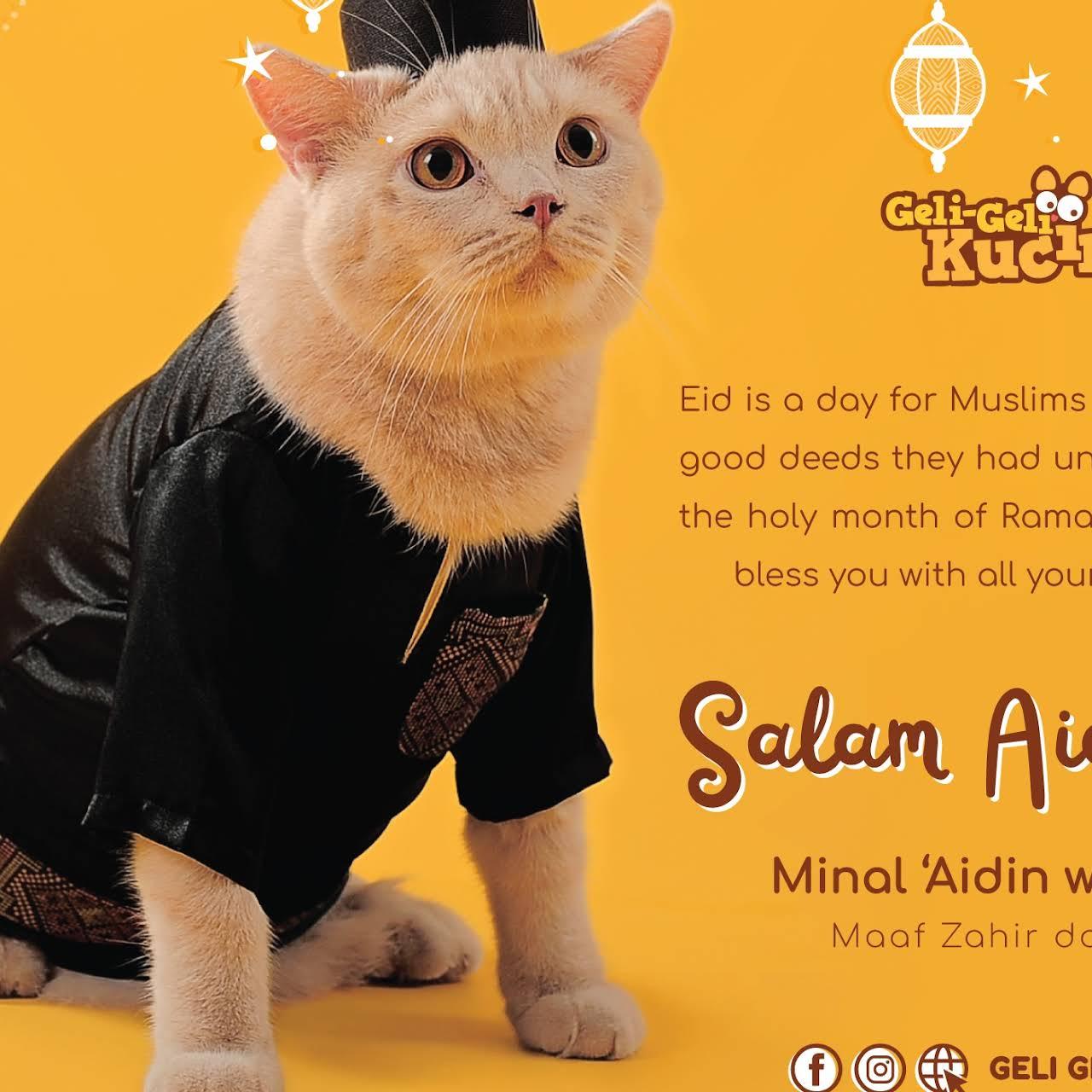 Geli Geli Kucing Kuala Kangsar Pet Shop Kuala Kangsar Branch