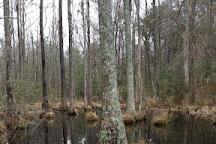 Croatan National Forest, North Carolina, United States