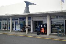 Azores Whale Watching TERRA AZUL, Vila Franca do Campo, Portugal