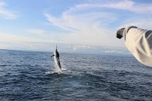 BluePearl Sportfishing, Quepos, Costa Rica
