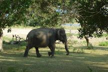 Dilra Tours, Negombo, Sri Lanka