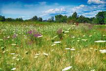Belle Isle Marsh Reservation, Boston, United States