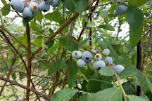 Blueberry Hill Farms, Edom, United States