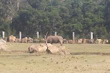 Mogo Zoo, Mogo, Australia