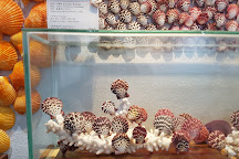 World Seashell Museum, Seogwipo, South Korea