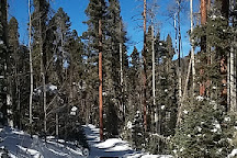 Enchanted Forest Cross Country Ski Area, Red River, United States