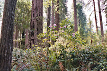 Redwood Creek Buckarettes, Orick, United States