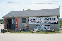Granite State Whale Watch, Rye, United States