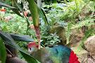 Tropical Wings Zoo