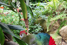 Tropical Wings Zoo, Chelmsford, United Kingdom