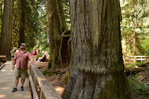 Grove of the Patriarchs, Mount Rainier National Park, United States