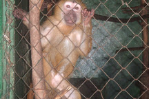 Accra zoo, Accra, Ghana