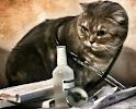"""ветеринарный кабинет """"БусидоVet"""""""