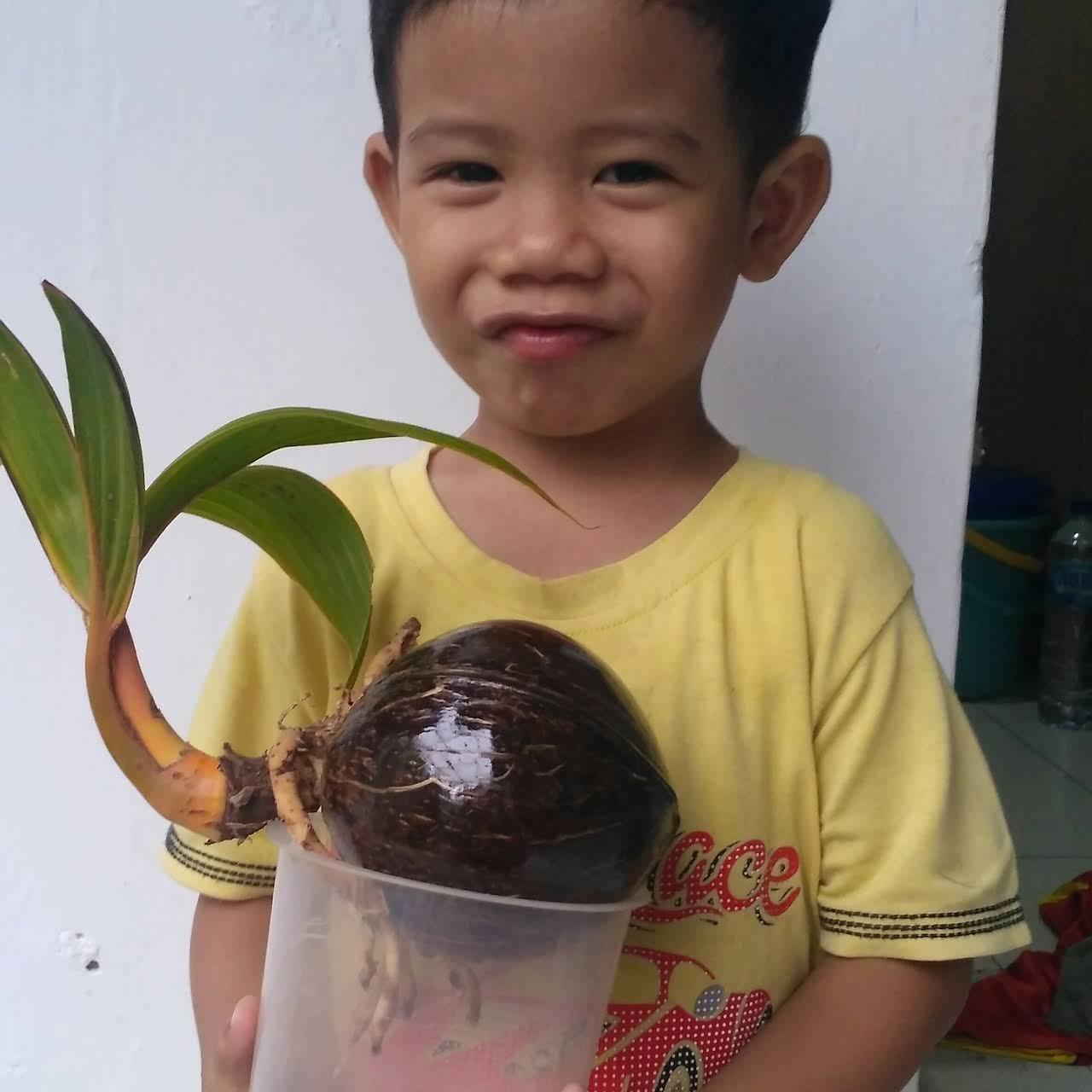 Jual Bonsai Kelapa Antik Jakarta Toko Perlengkapan Rumah