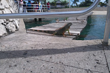 Cayman Turtle Centre: Island Wildlife Encounter, West Bay, Cayman Islands