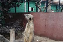 Sanjesfertier speel- en dierenpark, De Westereen, The Netherlands