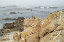 Bird Rock Vista Point, Pebble Beach, United States
