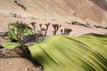 Charly's Desert Tours, Swakopmund, Namibia