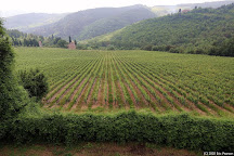 Wine & Tours Day Tours, Florence, Italy