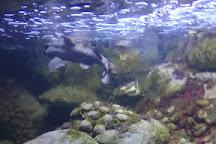 Blue Reef Aquarium, Portsmouth, United Kingdom