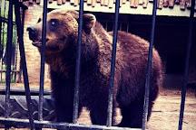 Eco Park Zoograd, Pushkinskie Gory, Russia