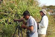 Cambodia Birding Tour, Siem Reap, Cambodia