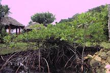 Palau Aquarium, Koror, Palau