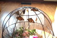 Idlewild Butterfly Farm, Louisville, United States