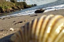 Durgan Beach, Falmouth, United Kingdom