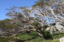 Charlotte Pass, Kosciuszko National Park, Australia
