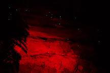Blue Mountains Glow Worm Tours, Mount Tomah, Australia