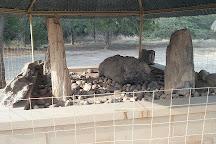 Akal Wood Fossil Park, Jaisalmer, India