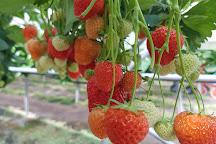 The Strawberries Terrace, Rijsbergen, The Netherlands