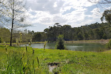 Ashcombe Maze & Lavender Garden, Shoreham, Australia