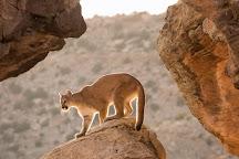 Kathleen Reeder Wildlife Photography, Phoenix, United States
