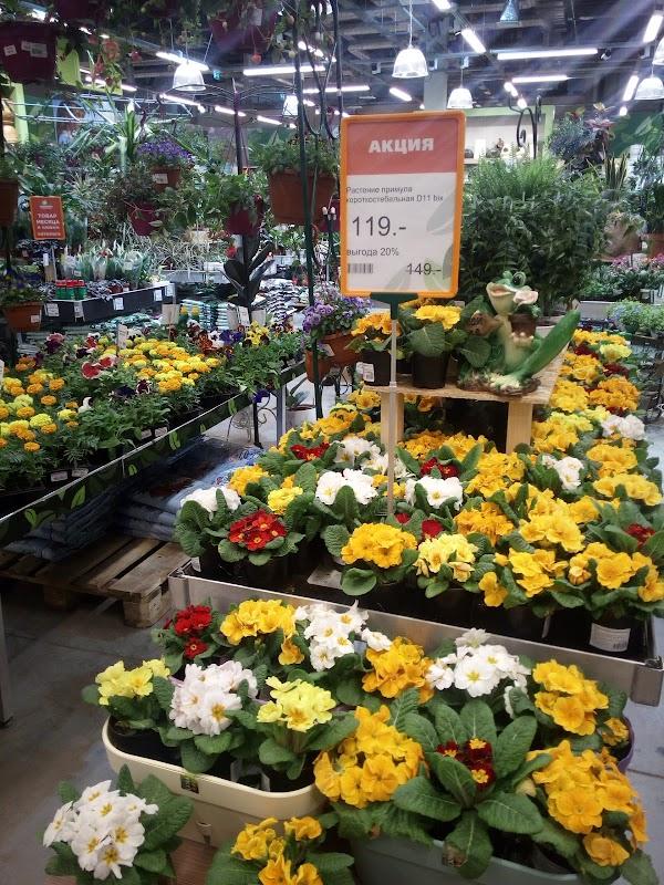 Черкассы, купить цветы в пушкино дешево