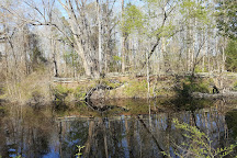 Dismal Swamp State Park, South Mills, United States