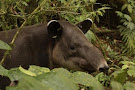 Tapir Valley Nature Reserve