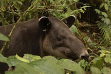 Tapir Valley Nature Reserve, Bijagua de Upala, Costa Rica