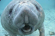 Manatee Tour and Dive, Crystal River, United States