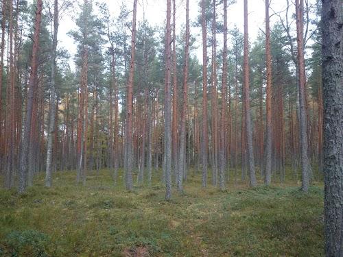 Harku forest trails