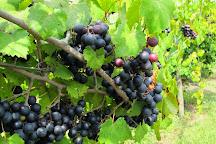 Old South Winery, Natchez, United States